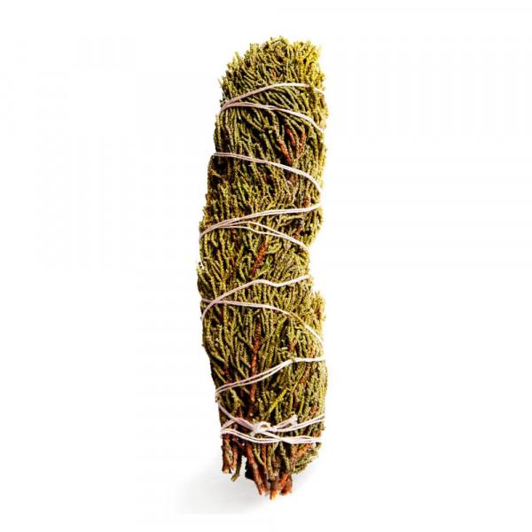 Jalovec Západní (Juniperus occidentalis) - 1 svazek - 20 cm