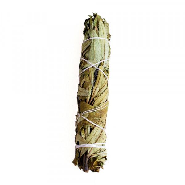 Yerba Santa (Eriodictyon Californicum) - 1 svazek - 23 cm